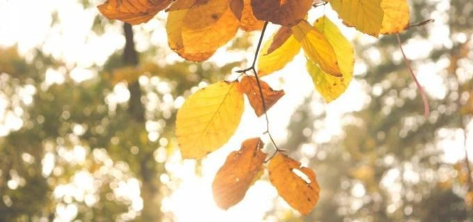 herfst geel